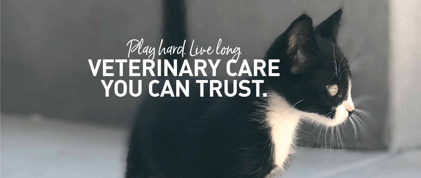 Veterinary Care You Can Trust.