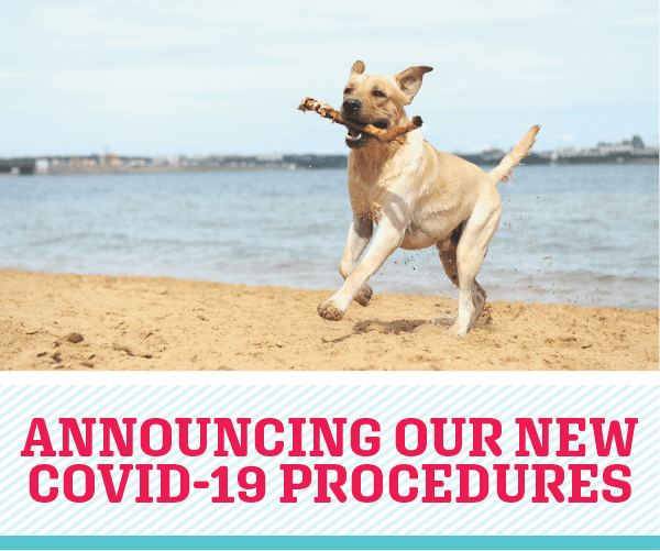 Announcing Our New COVID-19 Procedures